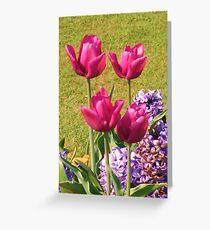 Pink Tulip Quartet - Hylands Park Greeting Card