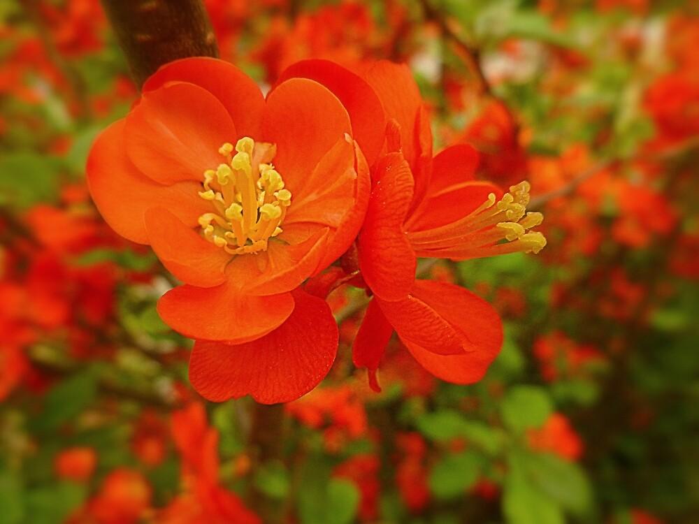 orange flora by dale54