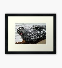 Cambria Seal Framed Print
