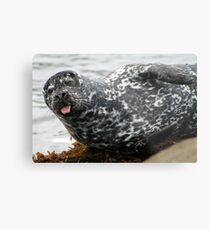 Cambria Seal Metal Print