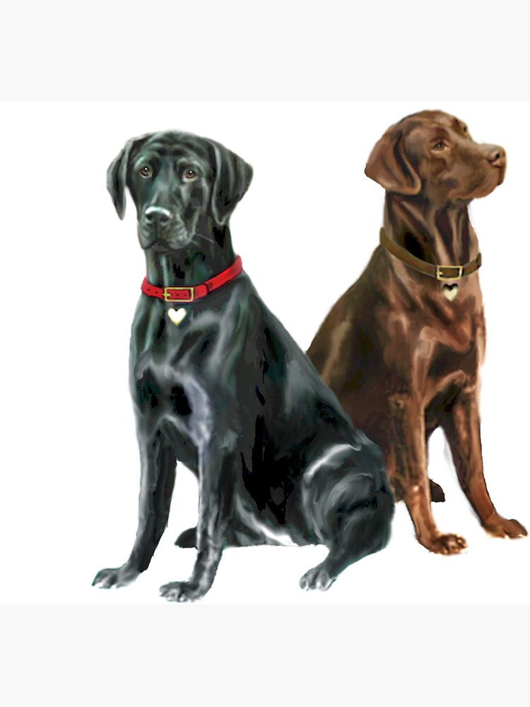 Labrador Retrievers (two) - Black and Chocolate by JeanBFitzgerald