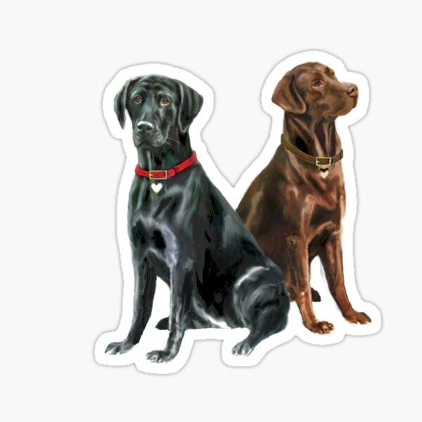 Labrador Retrievers (two) - Black and Chocolate Sticker