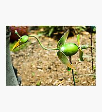 METAL WHIMSY IN THE FLOWER BED Photographic Print