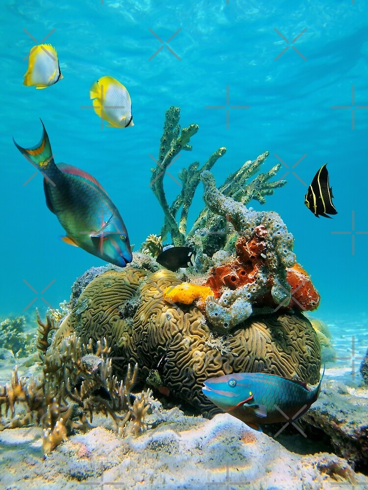 Colorful tropical marine life underwater sea by Dam - www.seaphotoart.com