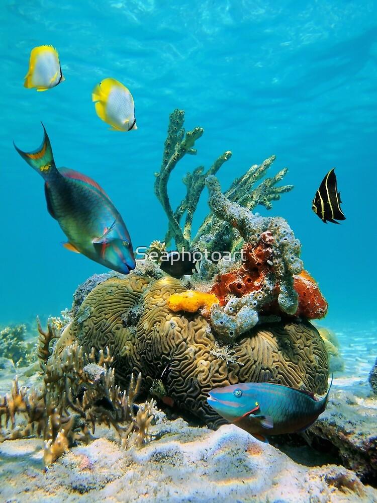 Sea Ocean Sea Turtles Swimming Corals Exotic Colorful Fish ... |Colorful Underwater Life