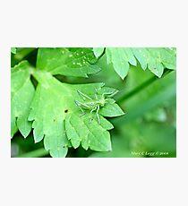 Grasshopper green on green leaf Photographic Print
