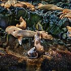 Patagonia 4: Where Sleeping Sea Lions Lay by Ted Byrne