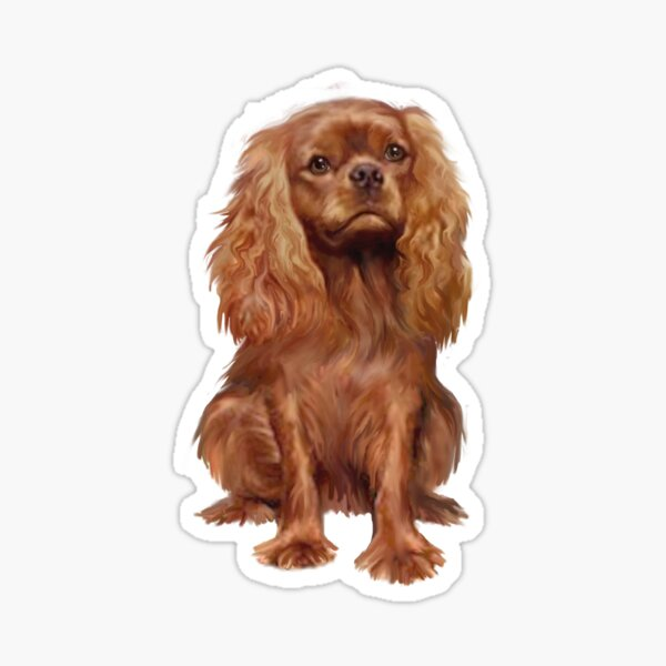 Cavalier King Charles Spaniel - Ruby  Sticker