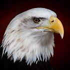 Portrait Of The American Bald Eagle by Len Bomba
