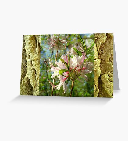 A Woodland in Spring Greeting Card