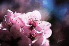 You Brighten my Day by Vicki Pelham