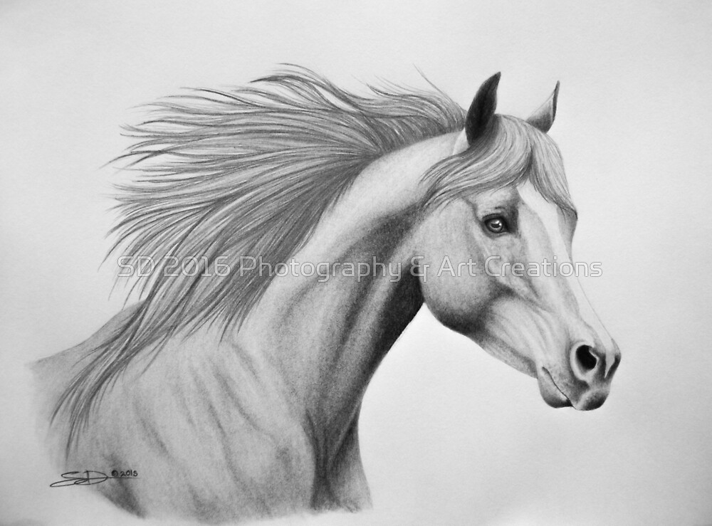 """Spirit of the Sands"" - Arabian horse by SD 2016 Photography & Art Creations"