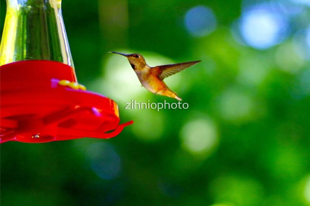 Humming bird by zihniophoto