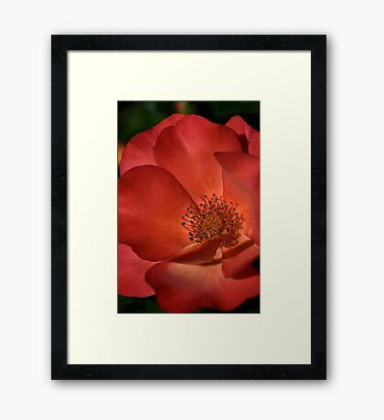 Rich in Colour Framed Print