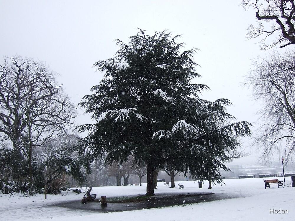 Cedar Tree covered in Snow by Hodan