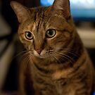 My cat Beefcake!! by Jimson Carr
