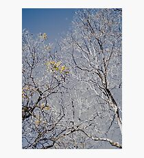 Exposed Branches Photographic Print