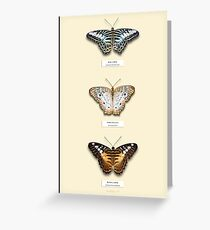 Butterfly Vertical Collection 5 Specimen style print  Greeting Card