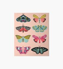 Lepidoptery No. 1 by Andrea Lauren  Art Board