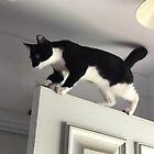 Door Cat Nelson. How many lives? by TeAnne