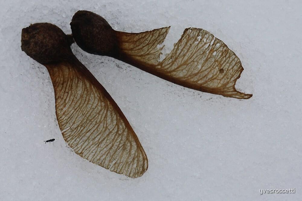 fallen pair by yvesrossetti
