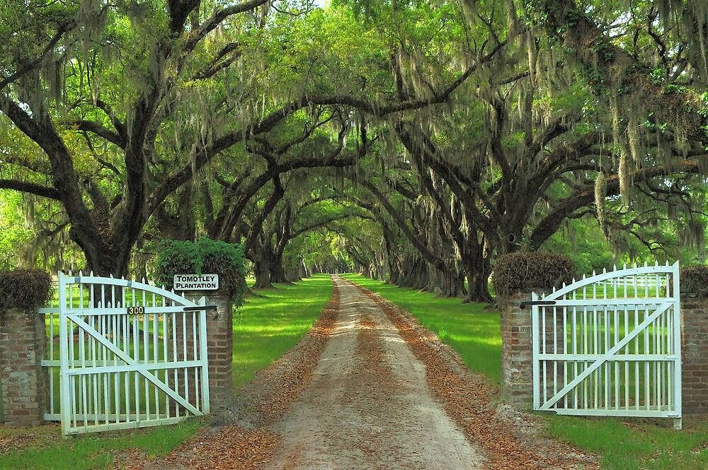 Tomotley Plantation, Sheldon, South Carolina by fauselr