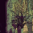 Window, Vase and Lace by linmarie