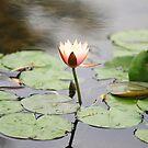Lotus @ Wetland Park by DDIsland