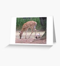 The Fawn And The Pit Bull Greeting Card