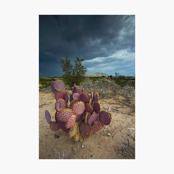 Season of the Storm Photographic Print
