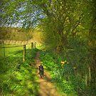 SHADOW WALKING by j.p. Howley