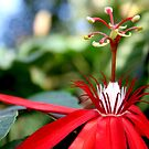 Red passion by Eliza1Anna