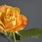 The Rose by Erwin G. Kotzab