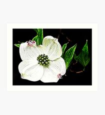 Simply White Art Print
