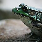 Froggy 2 by Matthew Williams