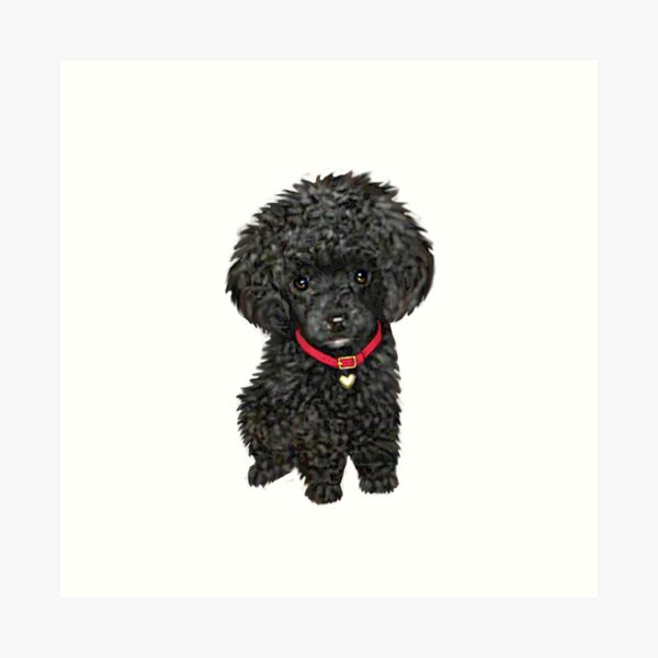 Poodle - Miniature Black Pup Art Print