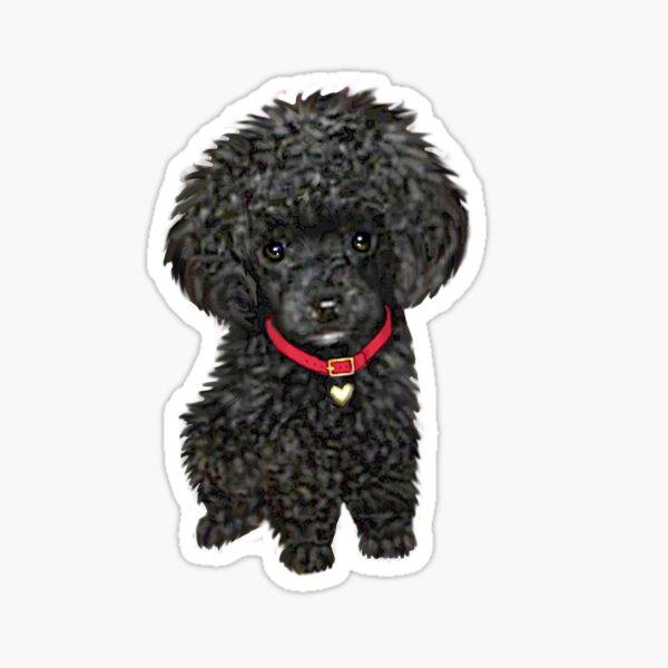 Poodle - Miniature Black Pup Sticker