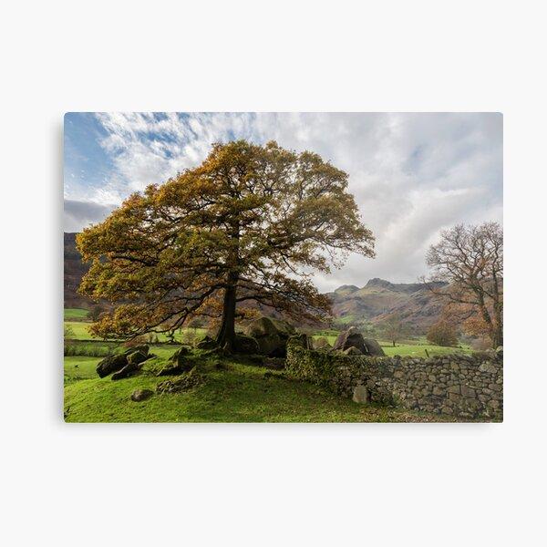 Langdale view Autumn tree Metal Print