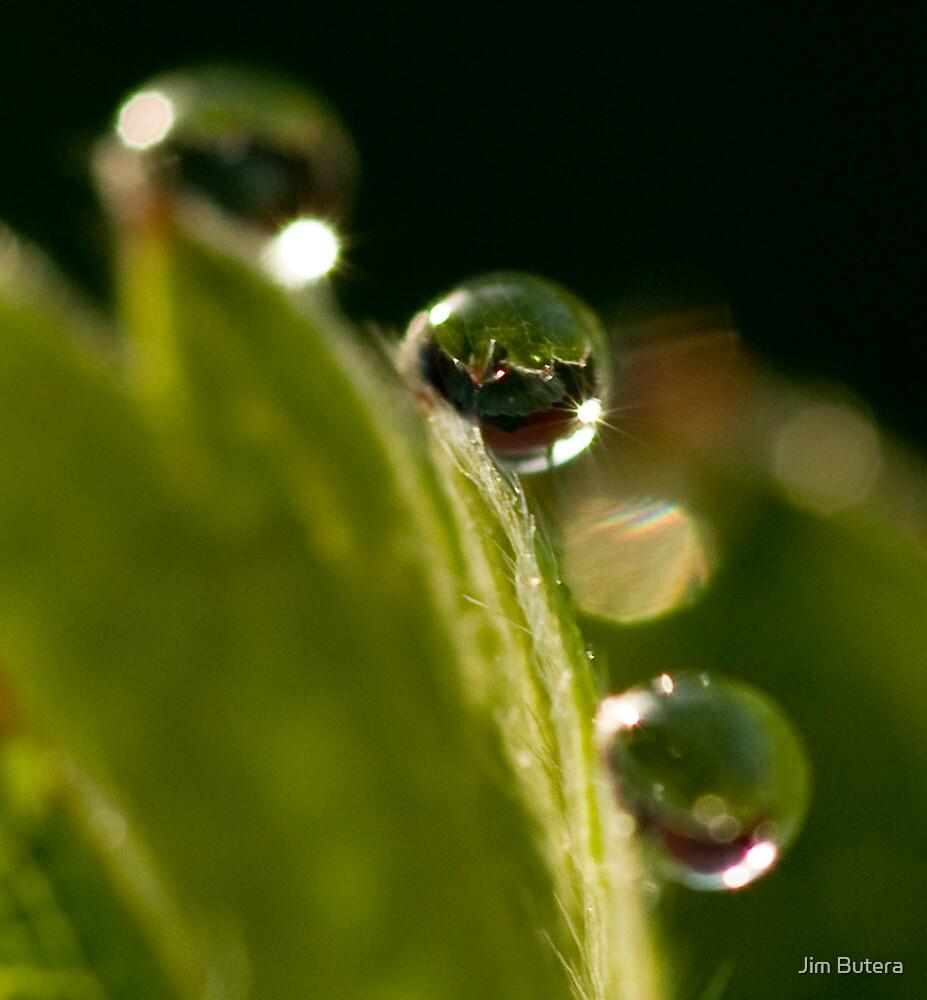 Strawberry dew by Jim Butera