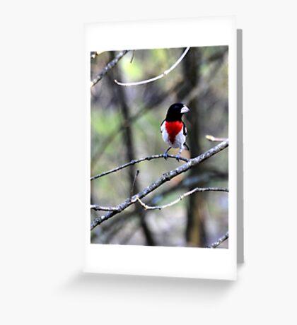 Rose Breasted Grosbeak Greeting Card