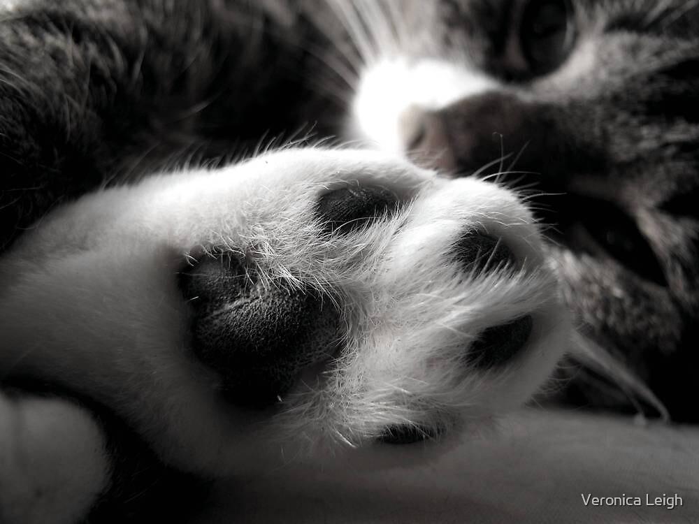 Kitty Foot by Veronica Schultz