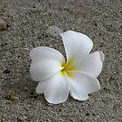 Fiji Flower by Annie Smit