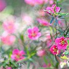 Pink jungle, flowers by Kornrawiee