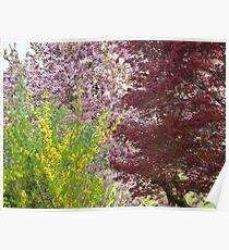 Tri Color Spring Blooms  Poster