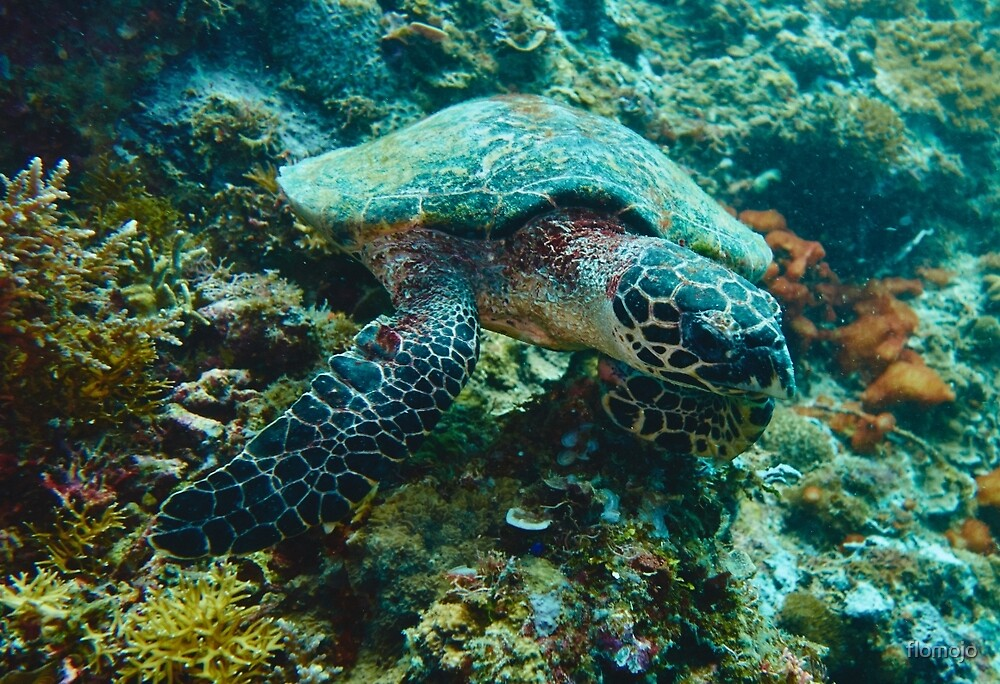 Turtle grassing on corals by flomojo