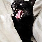 VAMPIRE CAT! by Heather Friedman