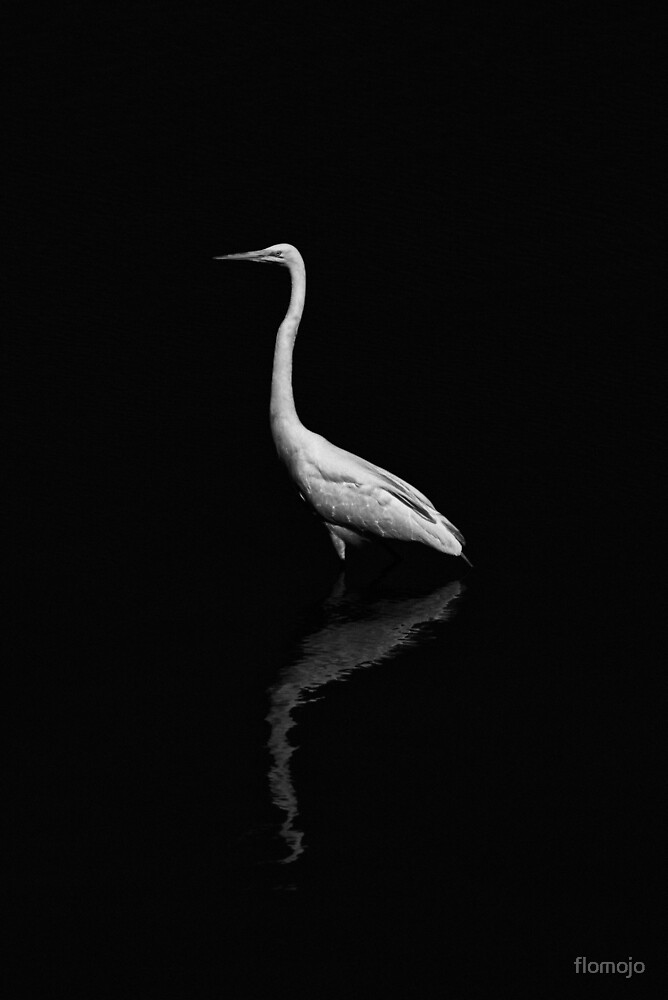 black and white heron with reflection by flomojo
