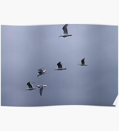 Gulls in a Storm (1) Poster