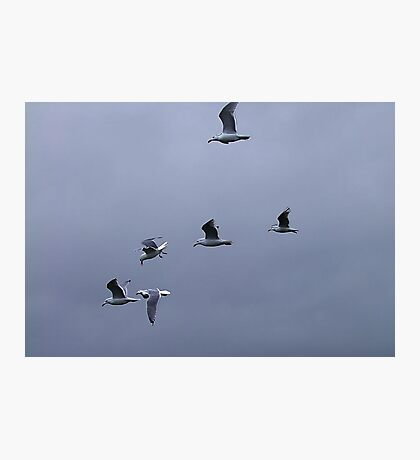 Gulls in a Storm (1) Photographic Print