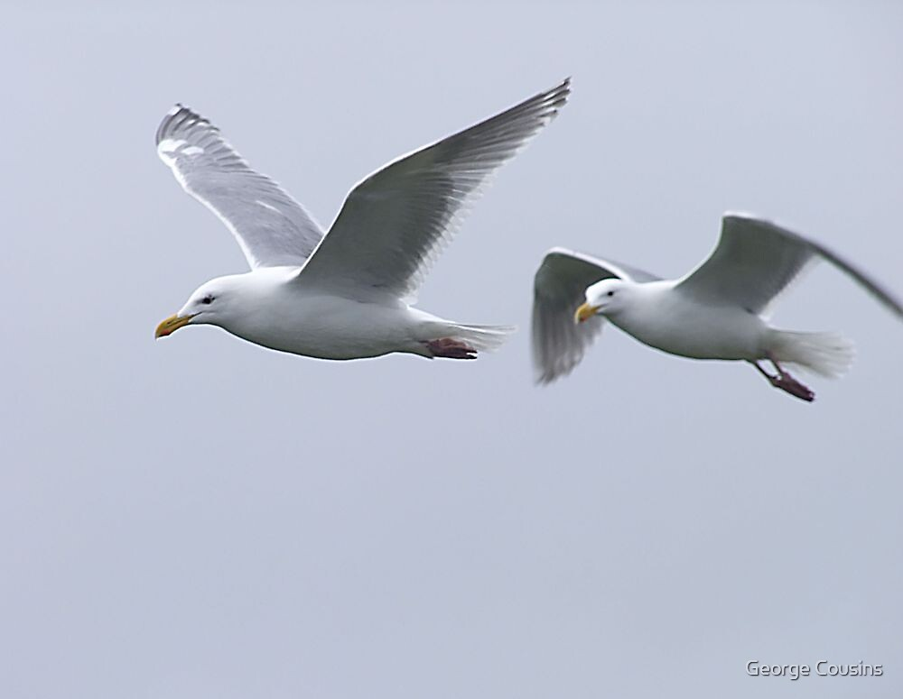Gulls in a Storm (5) by George Cousins